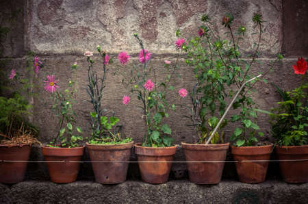 plant in pot: Rural house facades decorated with old vases of flowers