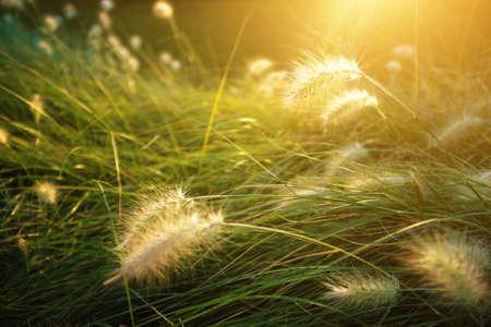 vegetation: Closeup on generic vegetation under the warm Sunlight of Spring