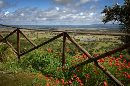 campo de flores: Hermoso paisaje de la región de Alentejo de Portugal en la primavera