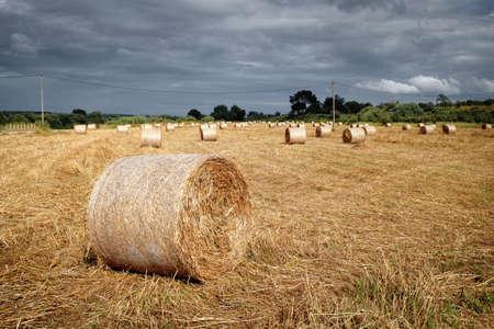 weed block: Rural landscape with straw rolls in Alentejo region, Portugal