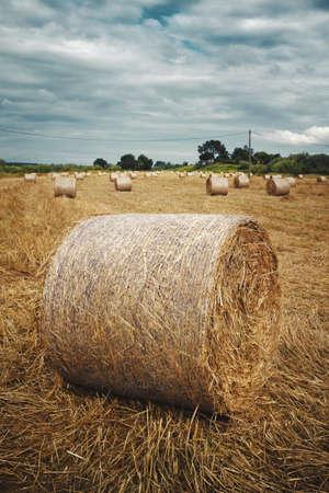 Rural landscape with straw rolls in Alentejo region, Portugal. Stock Photo