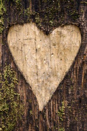 Hartvormig snijwerk op een boomschors met mos