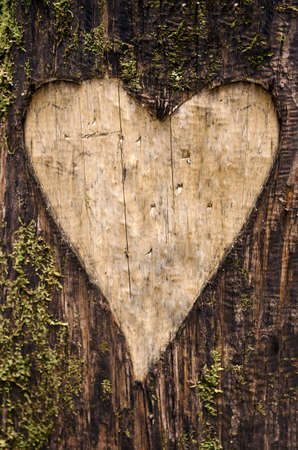 bark carving: Heart-shaped carving on a tree bark with moss