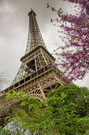 Down-up view of Eiffel Tower in Paris framed by tree branches