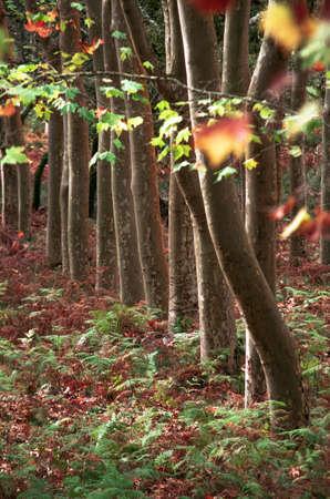 tronco: Fondo de la naturaleza de los troncos y las hojas de otoño colorido