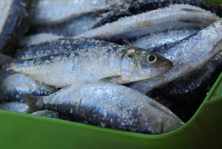 sardine: A group of sardines with salt ready to be cooked