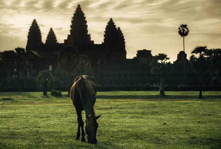 A Horse in front of the Angkor wat. photo