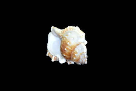 sea shell isolated on black backgound Stock Photo