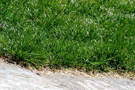 Hierba verde que crece a lo largo de la acera Foto de archivo