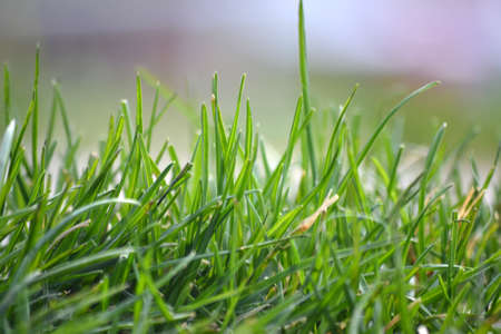Fondo fresco hierba verde