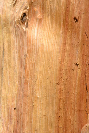 Wood grain texture Stock Photo