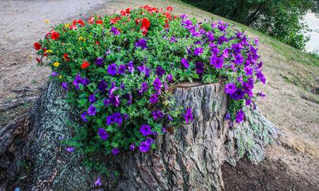 Flowers growing in tree stump Stock Photo