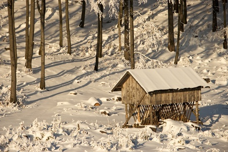 Winter pasturage Stock Photo - 8591555