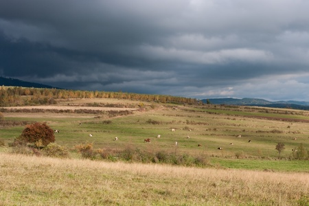 high day: Rainy clouds above the meadow