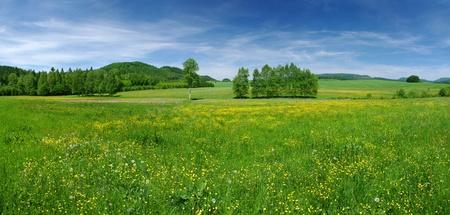 the countryside: Fresco Prato fiorito