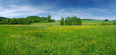 grass field: Fresh flowered meadow Stock Photo