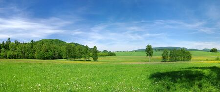 Green meadow and blue sky during the spring Stok Fotoğraf