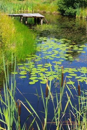 lagoas: Paisagem com lagoa e água plantas