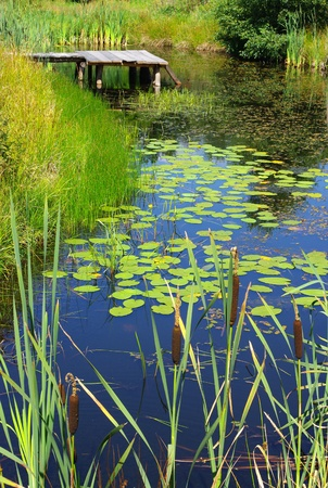 day lily: Scenery with pond and water plants