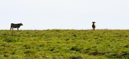 Two strange cows at the horizon Stock Photo - 9031331