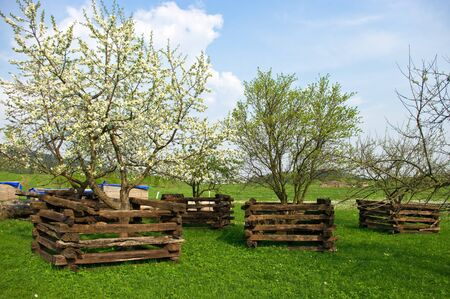Scene in orchard during the spring Stock Photo - 9609156