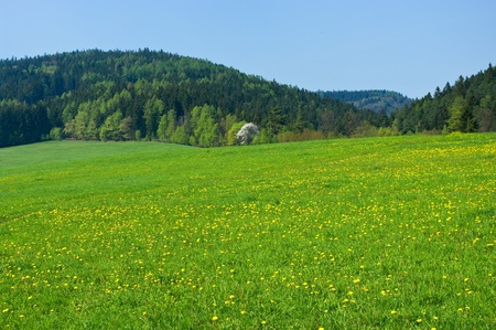 Spring scene with forest and hills photo
