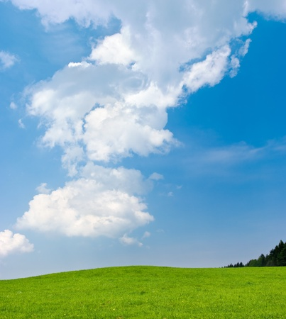 wood lawn: Scene with green meadow and blue sky Stock Photo