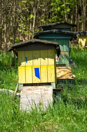 Row of beehives photo