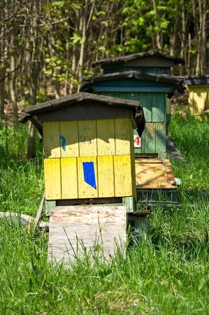 Row of beehives Stock Photo - 9731689