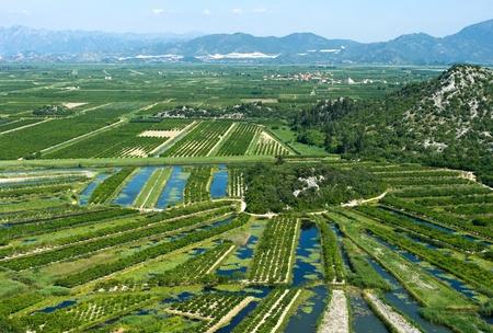 agricultural area: Agricultural area in Neretva river delta in Croatia