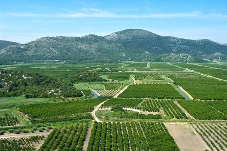 Agricultural area in Neretva river delta in Croatia photo