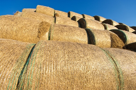 Bales of hay photo