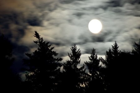 Moon and forest photo