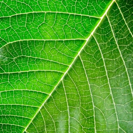 Green leaf with organic pattern