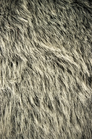 Bear fur for background usage photo