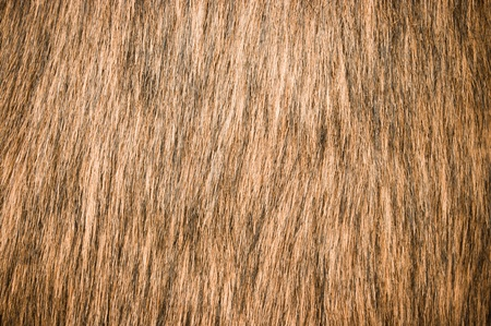 pelt: Brown fur for background usage Stock Photo
