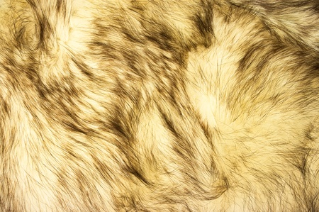 fox fur: Fox fur texture for background