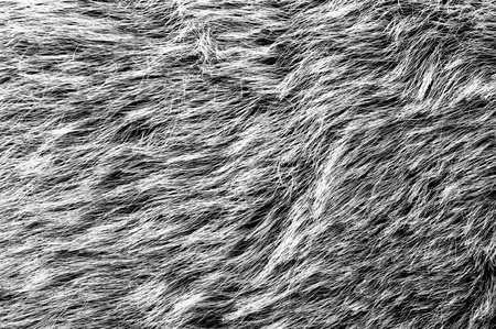 fur: Gray fur for background usage Stock Photo