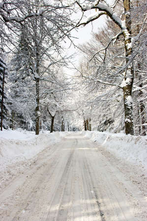 Road in the forest during the winter photo