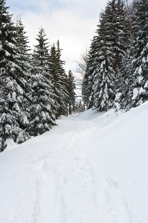 Path in forest during the winter photo