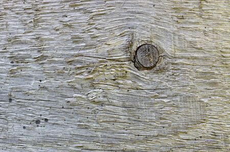 Old weathered plank with gnarl photo