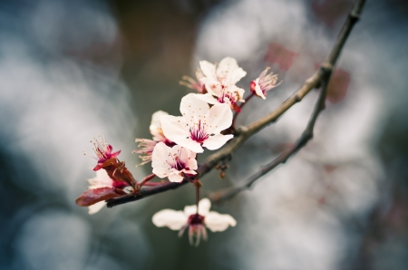 Flowered branch with blurred background photo