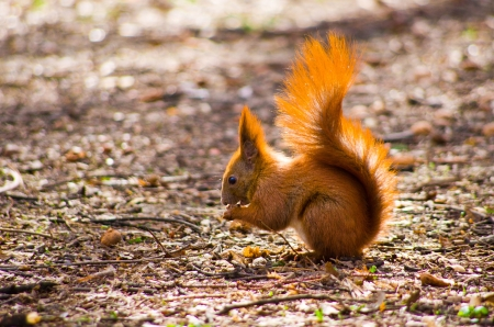 Little squirrel with fresh nut Stock Photo
