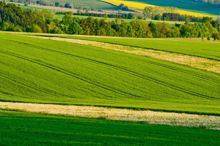 Green agricultural scenery during the spring