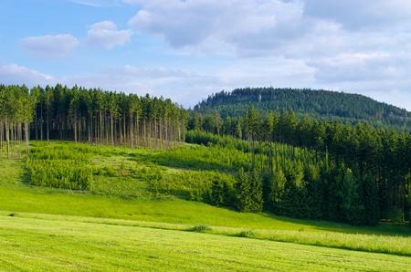 Landschap met weide en bos