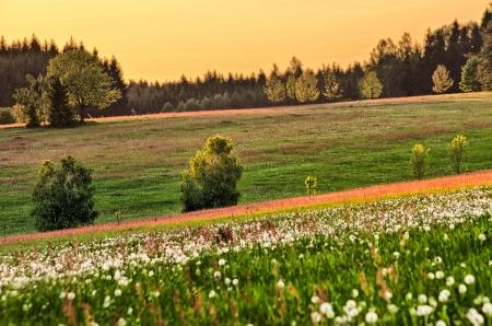 Spring flowered meadow with dandelions Standard-Bild