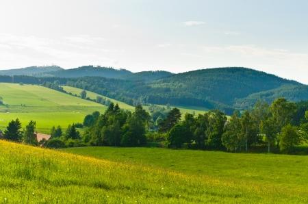 숲과 초원 풍경