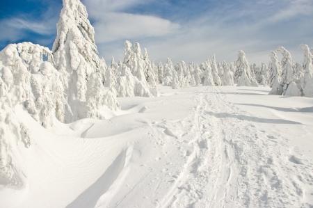 숲은 큰 산에 눈으로 덮여 스톡 콘텐츠