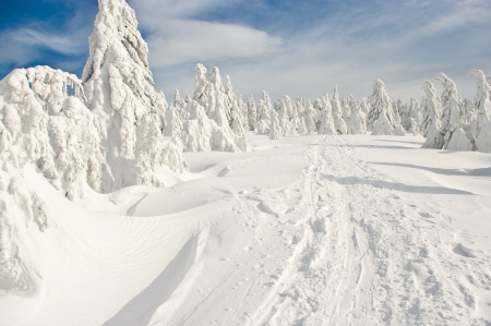 fresh snow: Forest covered by snow on big mountain