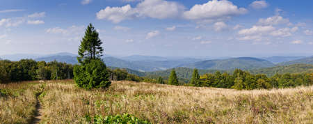 Panorama with lonely tree in Carpathians mountains photo
